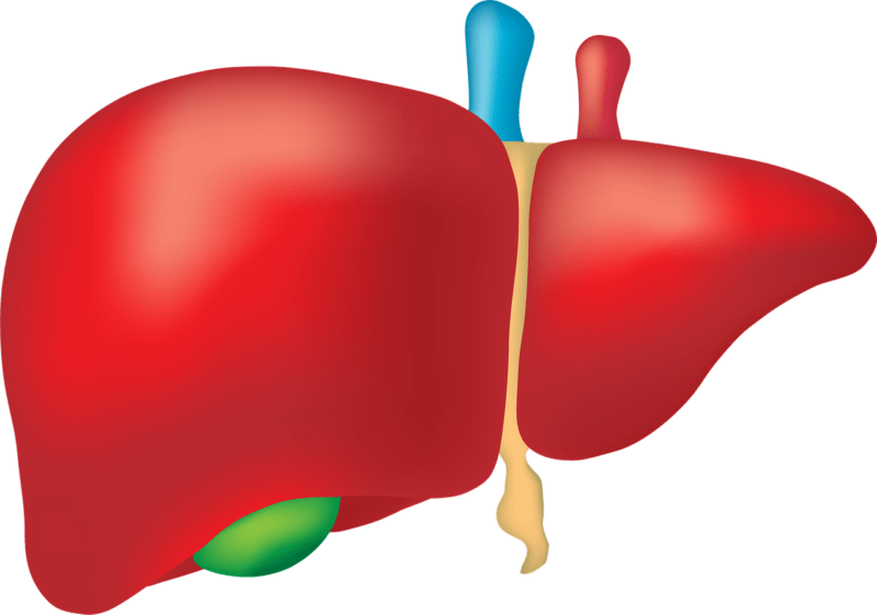 Why Is Fatty Liver Becoming An Increasingly Common Problem?