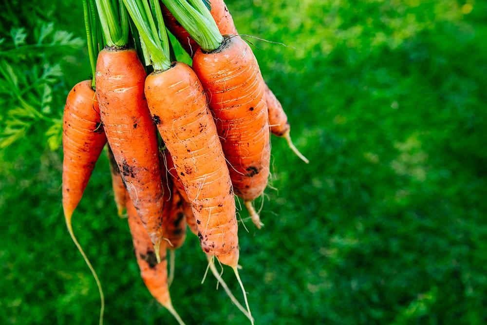 carrot is the best vegetable for diabetics
