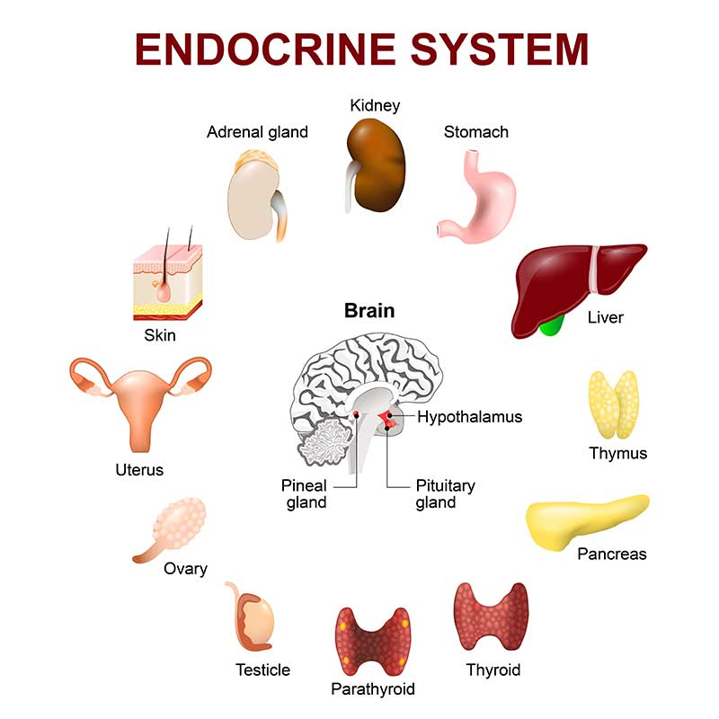 difference between diabetologist and endocrinologist