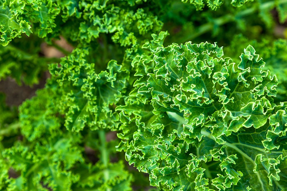 green leafy vegetable is good for diabetes