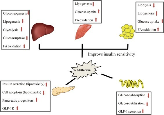Janumet xr is more effective than Metformin alone in controlling blood sugar levels.