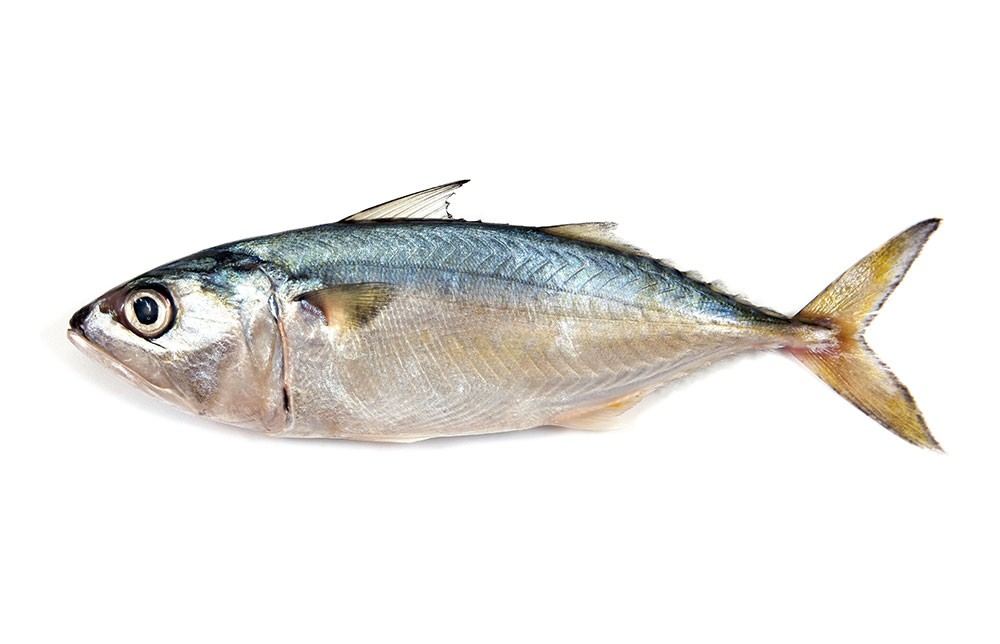 omega 3 what is it good for